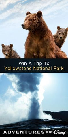 Enter to #Win a #Trip to Yellowstone National Park! #wildlife #contest VALID UNTIL MAY 4
