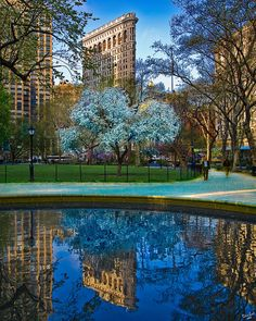 This brings back wonderful memories of what now seems a lifetime ago...  Spring In Madison Square Park, NYC by Chris Lord