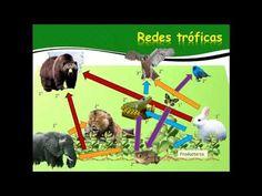 Transferencia de energia en los ecosistemas - YouTube Vídeo elaborado por Sismay García