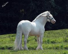 dress - Friesian White horse pictures video