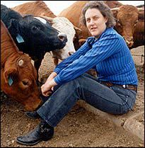 Temple Grandin - She has done so much for both the humane treatment of animals in slaughterhouses and in raising awareness for autism. Temple Grandin, Autism Education, Autism Classroom, Autism Resources, Thinking In Pictures, How Did It Go, High Functioning Autism, Colorado State University, Adhd