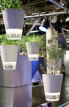 Vasos de planta- Destaques do IMM Colônia 2015 ·
