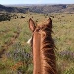 Wilson Ranches RetreatJohn Day Fossil Beds National Monument | Wilson Ranches Retreat
