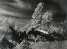 Edward HARTWIG (1909-2003) Wierzby, 1950 fotografia czarno-biała, brom, papier; 27 x 36,5 cm;
