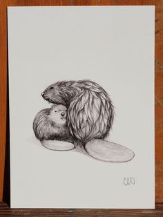 Beavers - Mama and Baby Snuggle by Catherine Odell :: Mama and baby share a moment after just getting out of the water.