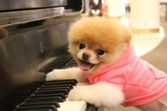 Pics of world's cutest Boo dogs