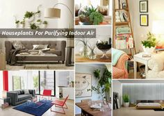 Top Houseplants that Work as Living Air Purifiers