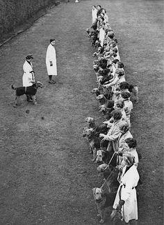 Canine Education Centre in Ashford. c. 1937