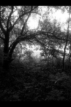 Grandma's creek <3