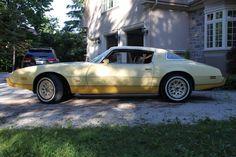 1981 Pontiac firebird yellowbird