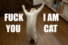 What I imagine my Cat is thinking when I shout at him to stop clawing the curtains. - Imgur