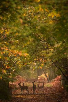 Photograph Autumn by Nicolas Le Boulanger on 500px