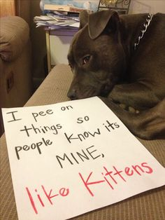 """""""I pee on things so people know its MINE, like kittens."""" ~ Dog Shaming shame - Pit Bull - Learned behavior"""