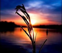 Natural Life, My Eyes, Sky, Celestial, Times, Sunset, Water, Pictures, Inspiration