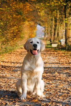 Thumbnail for version as of 16:02, 12 November 2011