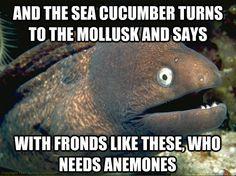 The Best/Worst Of Bad Joke Eel :))