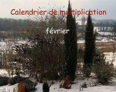 Calendrier de multiplication  Les plantes qui se multiplient et se bouturent en février