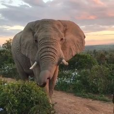 Beautiful Elephant in South Africa 🐘 😍 – Mammals Elephant Gif, Elephant Love, African Elephant, Elephant Videos, Elephant Facts, Animals And Pets, Baby Animals, Funny Animals, Cute Animals