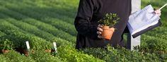 How to Plan an Idaho Vegetable Garden | Garden Guides