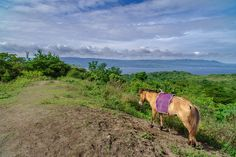 Top 10 Fun Things to do in Tagaytay, Philippines Tagaytay Philippines, Things To Do, Tropical, Top, Animals, Things To Make, Animales, Animaux, Animal