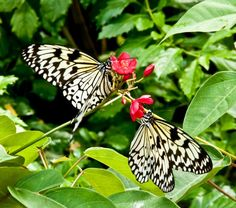 butterflies for pinetrist - Yahoo Search Results