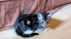 Znalezione obrazy dla zapytania koty gif