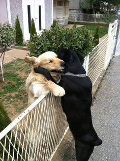 The Best Friendship Ever | The 100 Most Important Dog Photos Of All Time  NO FENCES CAN HOLD TWO FRIENDS APART.