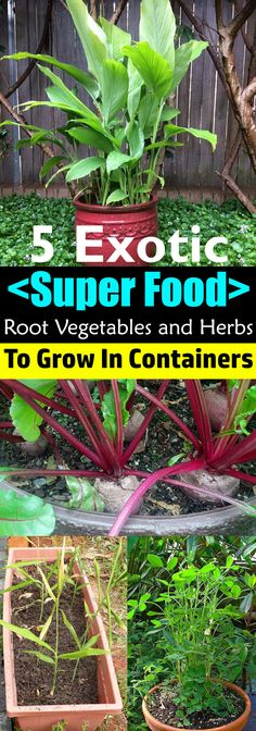 If you're planning to grow something unusual, try one of these SUPER HEALTHY root vegetables and herbs for containers!
