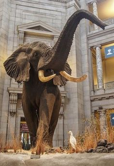 Washington DC, Museum of Natural History