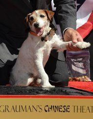 """A MILLION CONGRATS, UGGIE!!!! LONG MAY YOU BARK!!! +++++    """"Canine star Uggie adds paw print to Hollywood walk"""""""