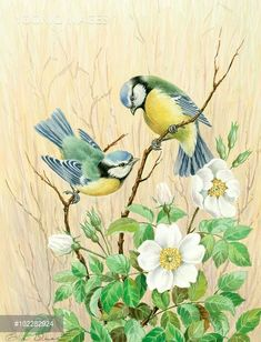 ru / Photo # 39 – 2 – - paint and art Watercolor Flowers, Watercolor Paintings, Face Paintings, Vogel Illustration, Wall Art Wallpaper, Bird Silhouette, Bird Pictures, Bird Prints, Bird Art