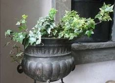 10 Best Air Filtering House Plants, According to NASA (With Pictures) - Modern D... - Modern Design Ivy Plants, Indoor Plants, Indoor Garden, Painting Pressed Wood, Dragon Tree, Golden Pothos, Insulation Materials, Peace Lily, Low Maintenance Plants
