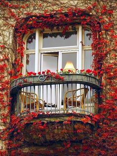 Ivy balcony, Paris