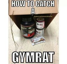 getting swole: gymrat Gym Humor Workout Memes, Gym Memes, Gym Workouts, Funny Workout, Crossfit Humor, Gym Humour, Sports Humour, Crossfit Baby, Exercise Humor