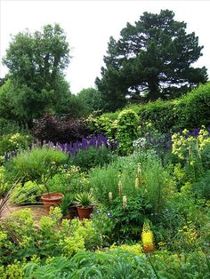 Hidcote Gardens, Gloucestershire, England - note from original pinner: by far one of the most beautiful gardens I have ever seen. (May 2001). The restaurant was charming and the home cooked food was delicious.