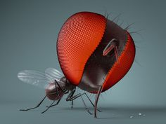 FLY Riding Helmets, Insects, Bee, Hats, Illustration, Animals, Stone, Honey Bees, Animales