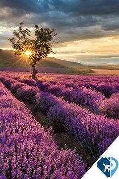Campos de Lavanda. Provenza, Francia Uno de los mayores atractivos de la Provenza, son los campos de lavanda, conocidos en el mundo entero, paisajes únicos que tiñen de lila y violeta los valles de la región. Estos campos se pueden recorrer ya sea en bici o a pie. Quedarás asombrado con tanto color.