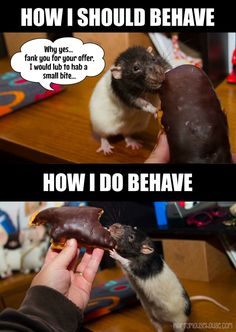 lessons from Etiquette Rat