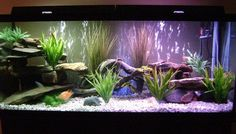 view 5 full verison photos of 150 gallons freshwater fish tank - photo - 150 gallon freshwater tank with mixture of parrots and cichlids - Fish Kept - 3 parrot cichlids, 10 assorted african cichlids, 2 rosey barbs, 1 catf. Unique Fish Tanks, Cool Fish Tanks, Tropical Fish Tanks, Cichlid Aquarium, Aquarium Fish Tank, Goldfish Aquarium, Aquarium Setup, Aquarium Design, 150 Gallon Fish Tank