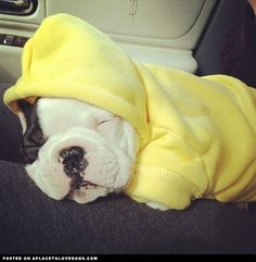 Bring out the hoodie for Autumn!  #bulldogs