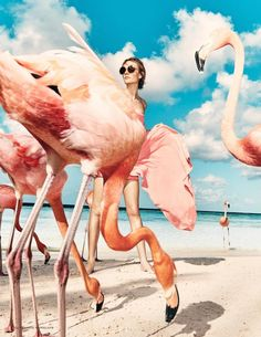 Dutch Vogue Editorial with Nimue Smit (Model). Flamingo's and the Beach.