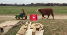Little girl takes her cow on a pretty hilarious walk around the yard