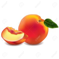 Exotic Fruits Stock Vector Illustration And Royalty Free Exotic ...