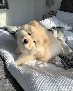 Cute White Puppies, Very Cute Puppies, Cute Baby Dogs, Cute Cats And Dogs, Baby Animals Pictures, Cute Animal Pictures, Animals And Pets, Cute Little Animals, Cute Funny Animals