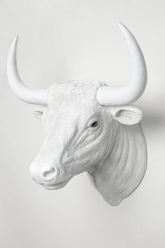 $249.00  Interior Illusions Bull Head Taxidermy