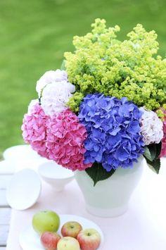 Mon envie d'hortensia, dans toutes ses couleurs !