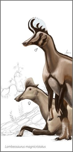 Lambeosaurus magnicristatus, a duck-billed dinosaur (hadrosaur) w/a hatchet-shaped hollow bony crest on top to its skull. Fossils of this herbivore date to the Late Cretaceous M to Ma old) of N.A: discovered in Alberta, Can. Dinosaur Art, Dinosaur Fossils, Reptiles, Mammals, Prehistoric Creatures, Prehistoric Wildlife, Bird Guides, Largest Dinosaur, Jurassic Park World