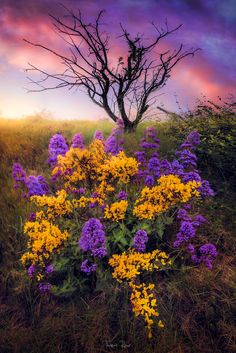 """""""Rebirth,"""" by Thomas Roux. A glorious sunrise in spring, Rabieux, France. Love the vibrant colors in this scene Mother Earth, Mother Nature, Beautiful World, Beautiful Places, Landscape Photography, Nature Photography, Image Nature, Nature Nature, Nature Scenes"""