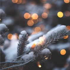 -Dreamy Christmas Scenes to Get You in the Christmas Spirit! Dreamy Christmas Scenes See it Christmas Cover, Christmas Scenes, Christmas Mood, Christmas Photos, Merry Christmas, Holiday, Christmas Ideas, Mermaid Wallpaper Backgrounds, Wonderland