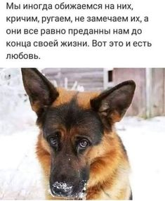 Фотография Animals And Pets, Cute Animals, Laws Of Life, Creepypasta Characters, Humor, In This World, Wise Words, Cute Dogs, Dog Cat